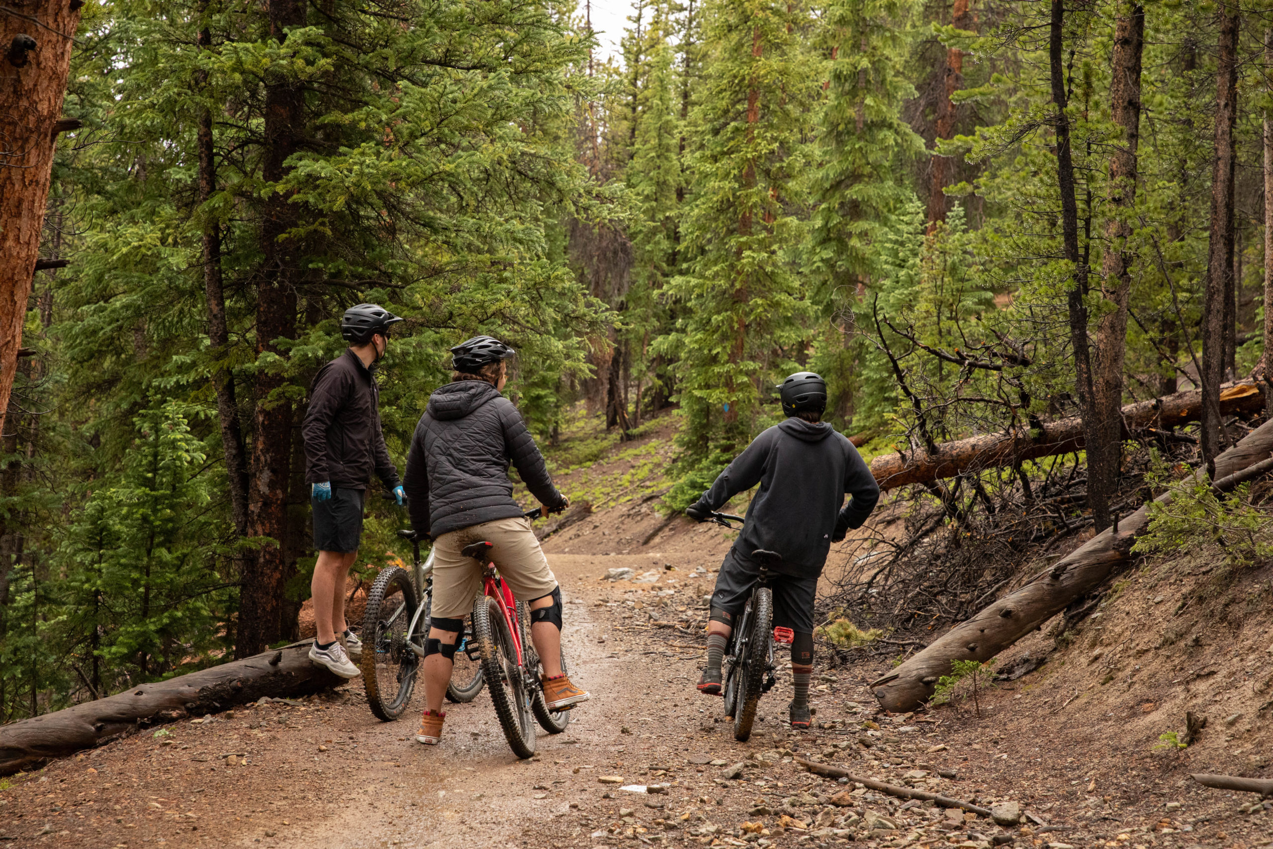 Three men on mountain bikes looking down a dirt trail in the forest